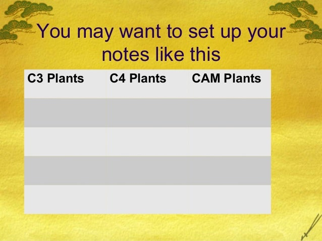 AP Biology Photosynthesis C3 C4 and CAM plants