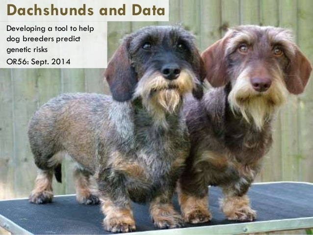 Dachshunds and Data  Developing a tool to help  dog breeders predict  genetic risks  OR56: Sept. 2014