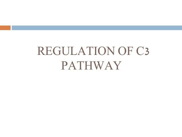 REGULATION OF C3 PATHWAY