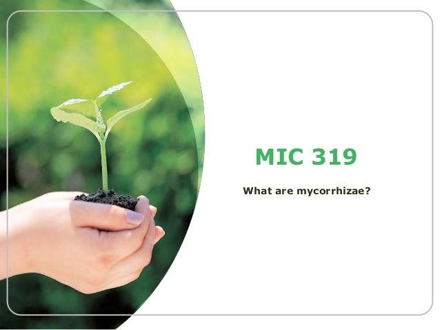 MIC 319 What are mycorrhizae?