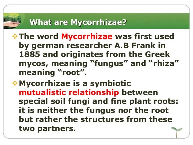 mutualistic relationship fungi and root hairs slide