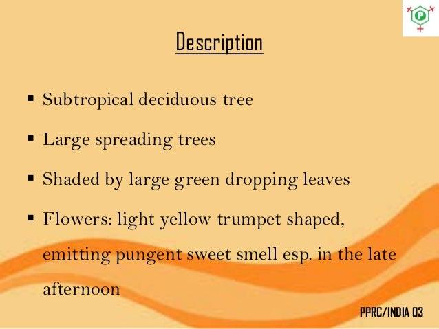 Custard Apple Tree Leaves Benefits