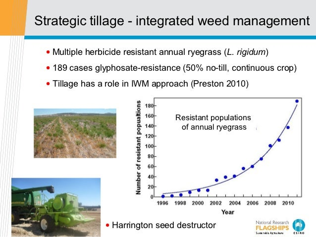 Strategic tillage - integrated weed management • Multiple herbicide resistant annual ryegrass (L. rigidum) • 189 cases gly...
