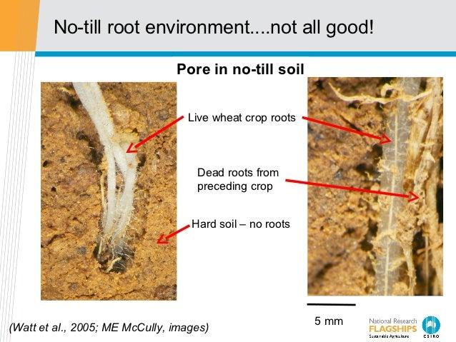 No-till root environment....not all good!                                Pore in no-till soil                             ...