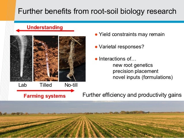 Further benefits from root-soil biology research  Understanding                                ● Yield constraints may rem...