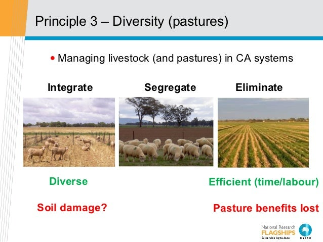 Principle 3 – Diversity (pastures)  • Managing livestock (and pastures) in CA systems  Integrate         Segregate        ...