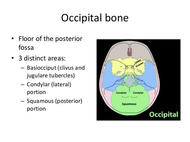 imaging in skull base, Human Body