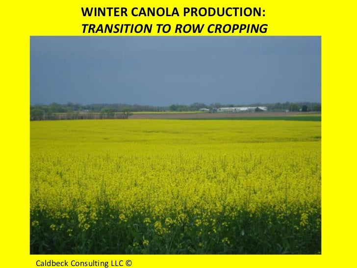 WINTER CANOLA PRODUCTION:           TRANSITION TO ROW CROPPINGCaldbeck Consulting LLC ©