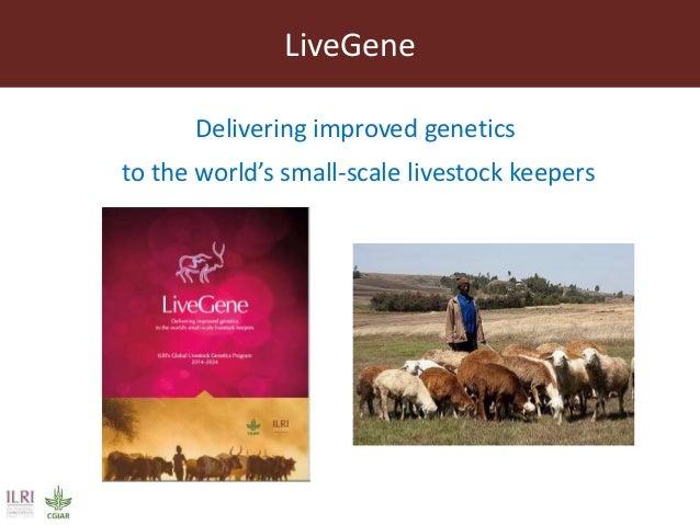 ILRI's Livestock Genetics Program - LiveGene Slide 2