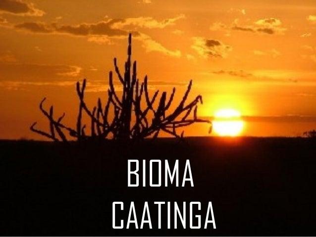 BIOMA CAATINGA