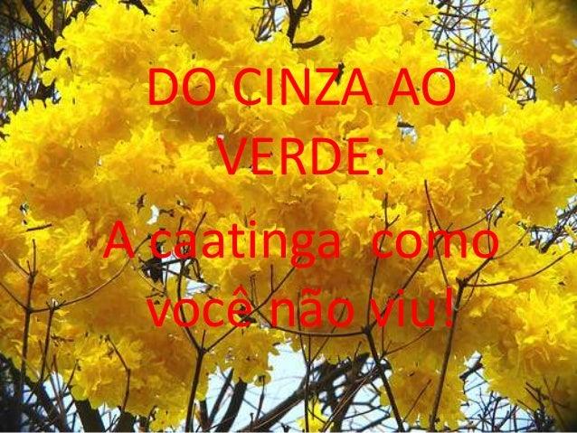 DO CINZA AOVERDE:A caatinga comovocê não viu!