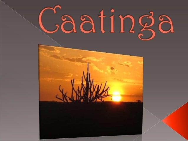 A caatinga é umecossistema típico donordeste brasileiro, queconstitui uma paisagembastante peculiar. Uma vez que mesmo ...