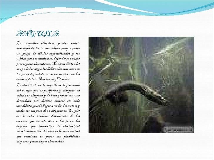 Caballito de mar o hipocampo