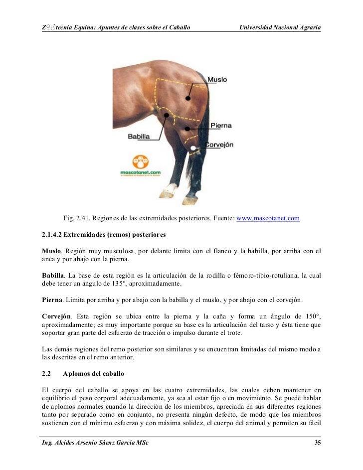 Excepcional Anatomía De Las Extremidades Posteriores Del Caballo ...