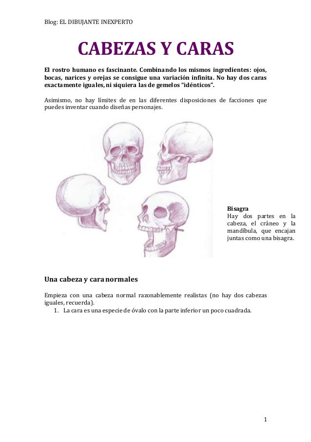 Blog: EL DIBUJANTE INEXPERTO  Bisagra  Hay dos partes en la  cabeza, el cráneo y la  mandíbula, que encajan  juntas como u...