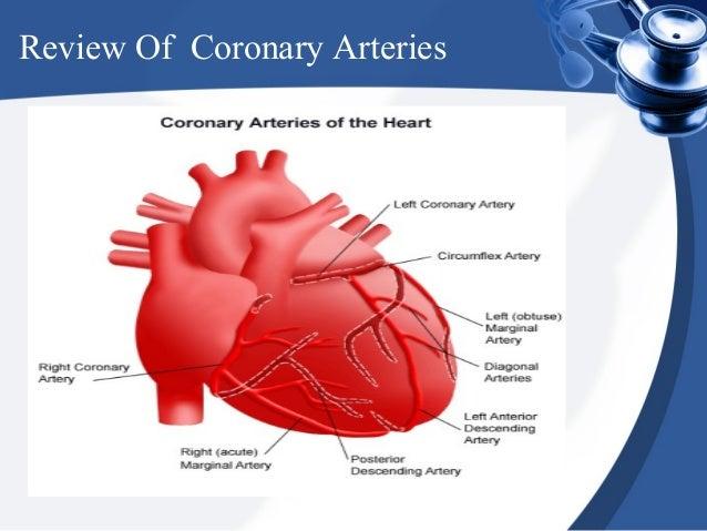 Review Of Coronary Arteries