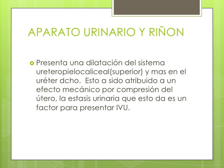 APARATO URINARIO Y RIÑON<br />Presenta una dilatación del sistema ureteropielocaliceal(superior) y mas en el uréter dcho. ...