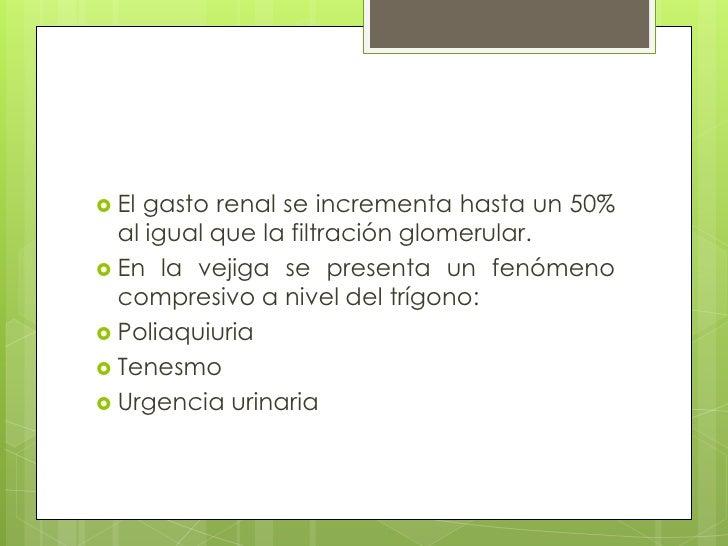 El gasto renal se incrementa hasta un 50% al igual que la filtración glomerular. <br />En la vejiga se presenta un fenómen...