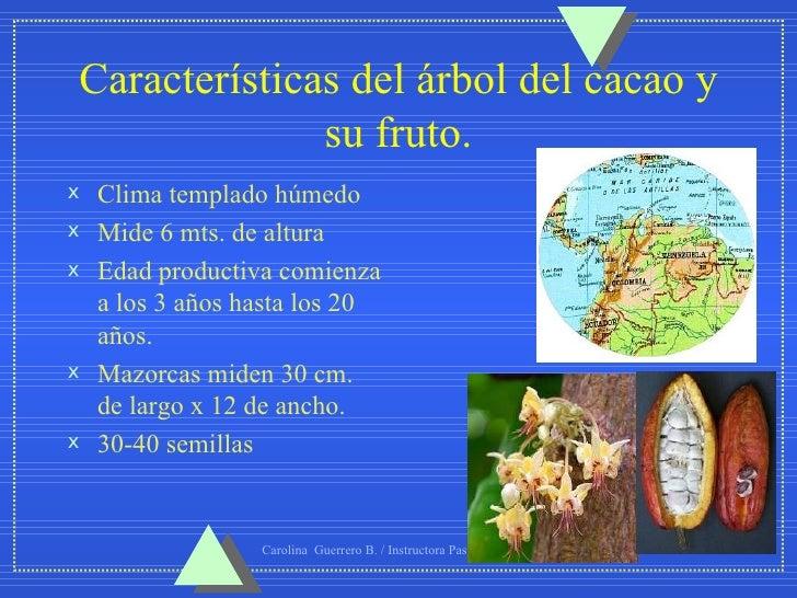 Cacao for Tipos de arboles y sus caracteristicas