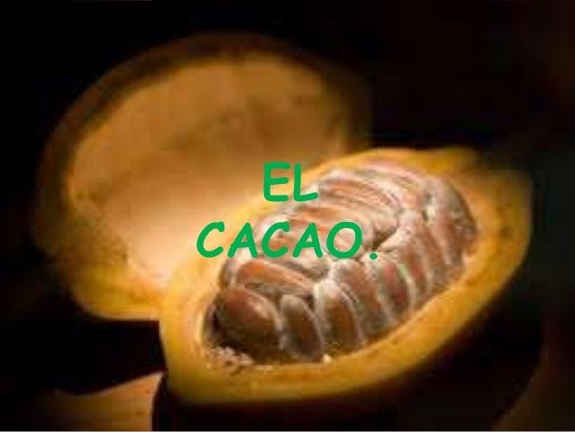 EL  CACAO.