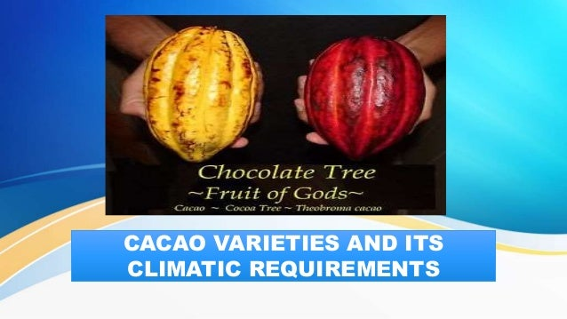CACAO VARIETIES AND ITS CLIMATIC REQUIREMENTS