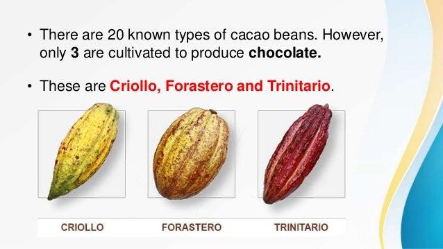 COCOA kinds cocoa