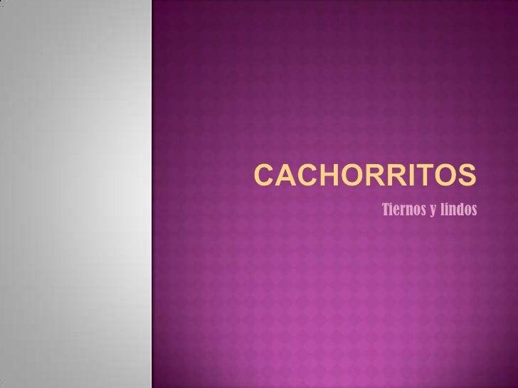 CACHORRITOS<br />Tiernos y lindos<br />