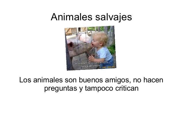 Animales salvajes  Los animales son buenos amigos, no hacen  preguntas y tampoco critican