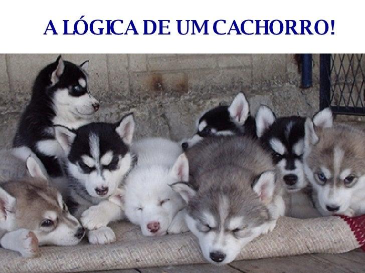 A LÓGICA DE UM CACHORRO!