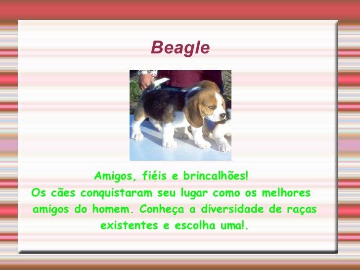 Beagle Amigos, fiéis e brincalhões! Os cães conquistaram seu lugar como os melhores amigos do homem. Conheça a diversidade...