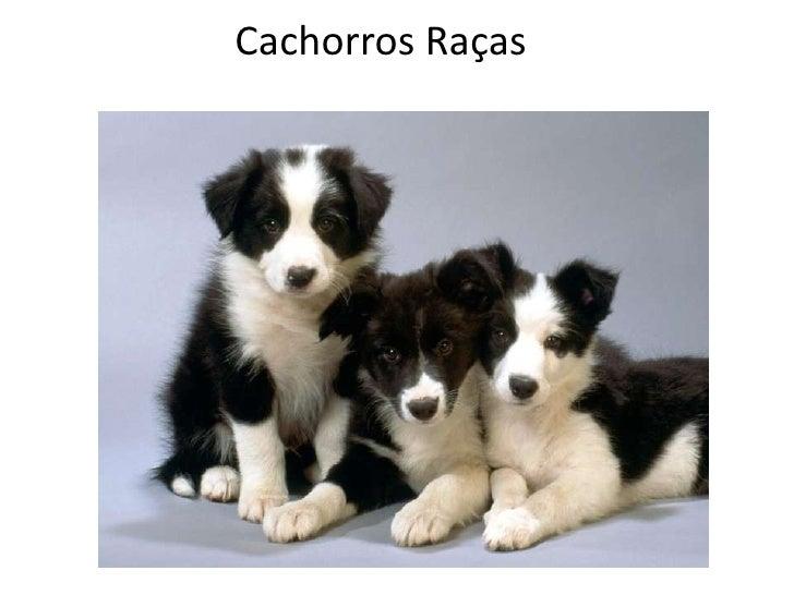 Cachorros Raças<br />