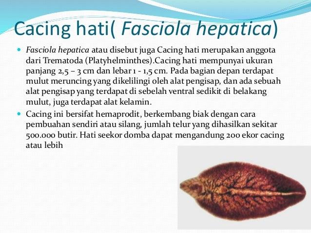 Cacing(vermes) biologi