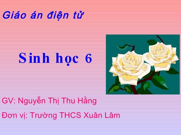 Giáo án điện tử Sinh học 6 GV: Nguyễn Thị Thu Hằng  Đơn vị: Trường THCS Xuân Lâm