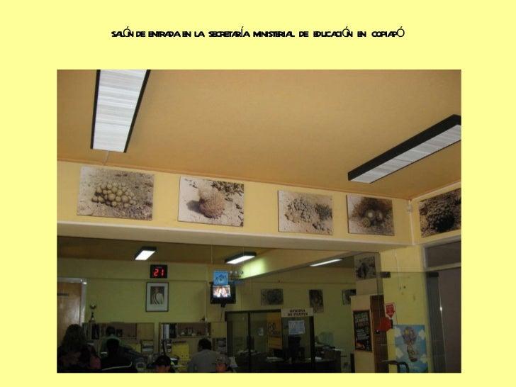 Cactaceas de cha aral for Cactario santiago