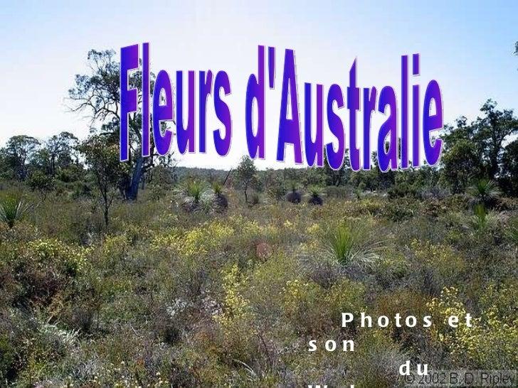 Fleurs d'Australie Photos et son  du Web