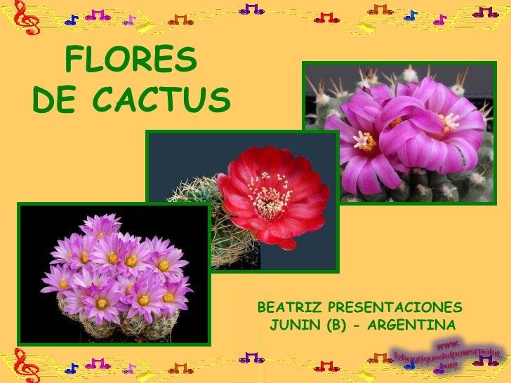 FLORES DE CACTUS BEATRIZ PRESENTACIONES  JUNIN (B) - ARGENTINA