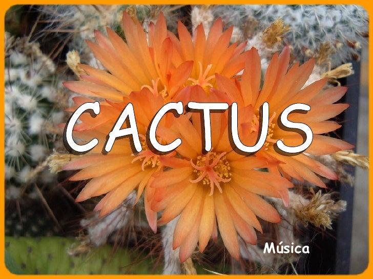 CACTUS Música