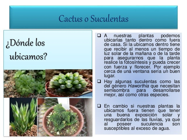 Cactus o suculentas for Cactus cuidados exterior