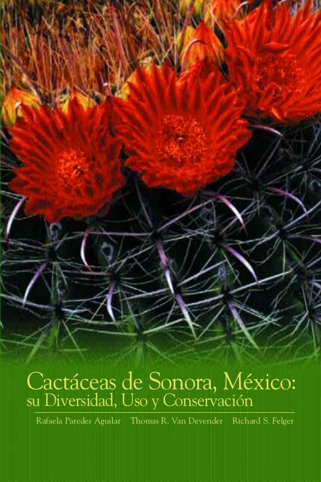 Cactus sonora for Cactaceas de chile