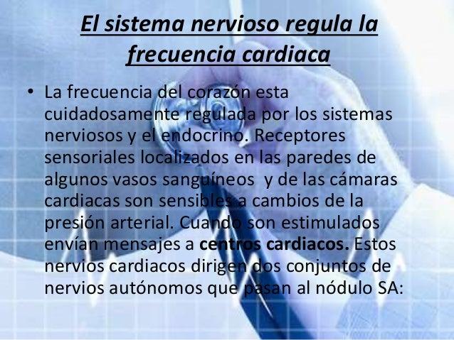 Cada latido cardiaco es iniciado por un marcapasos for Paredes sensoriales