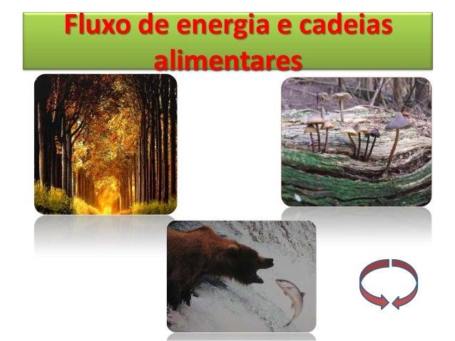 Fluxo de energia e cadeias       alimentares