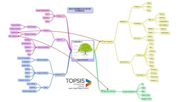 Cadeia Produtiva do Segmento Florestal