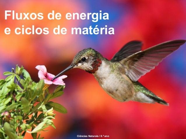 Fluxos de energia e ciclos de matéria  Ciências Naturais / 8.º ano  Ciências Naturais / 8.º ano