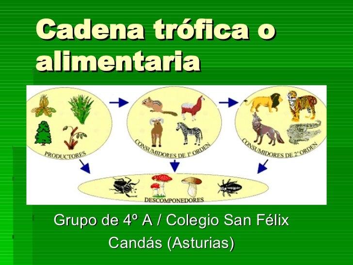 Cadena trófica o alimentaria Grupo de 4º A / Colegio San Félix Candás (Asturias)
