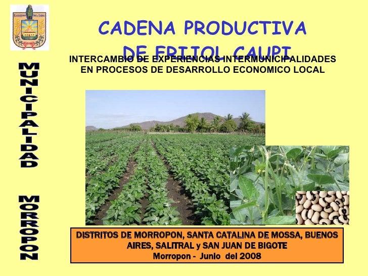 CADENA PRODUCTIVA DE FRIJOL CAUPI DISTRITOS DE MORROPON, SANTA CATALINA DE MOSSA, BUENOS AIRES, SALITRAL y SAN JUAN DE BIG...