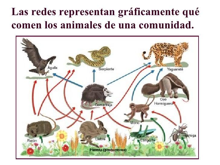 Fotos de cadenas alimenticia de animales 28