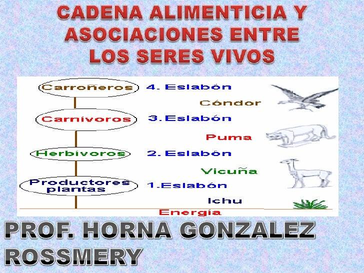 CADENA ALIMENTICIA Y <br />ASOCIACIONES ENTRE <br />LOS SERES VIVOS<br />PROF. HORNA GONZALEZ ROSSMERY<br />