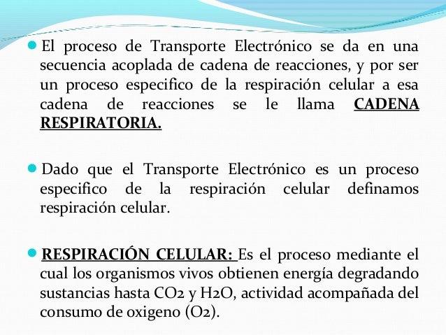 cadena respiratoria y fosf oxidativa 2012
