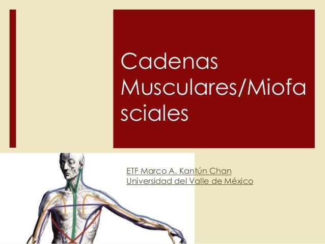 Cadenas Musculares/Miofa sciales ETF Marco A. Kantún Chan Universidad del Valle de México