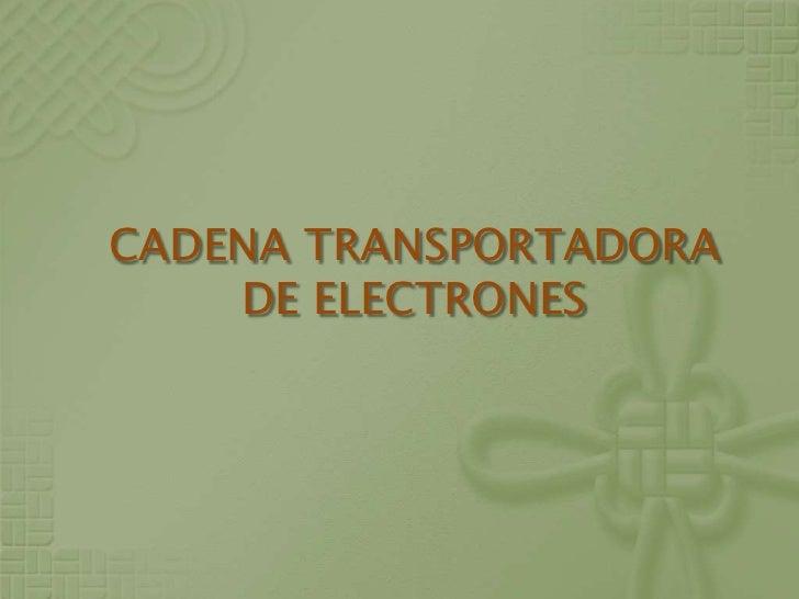 CADENA TRANSPORTADORA DE ELECTRONES<br />